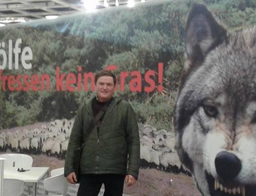 Messner sieht Rückkehr des Wolfes nach Deutschland kritisch