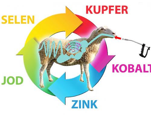 Gezielte Mineralstoffversorgung mit Bolus für Schaf und Lamm!