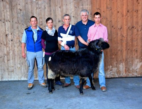 Ergebnis der Schafversteigerung für alle Schafrassen in Rotholz