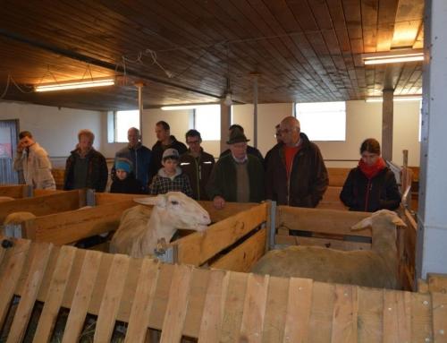 Fokus Lämmerproduktion- AK Exkursion nach Vorarlberg