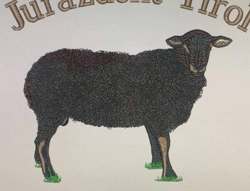 Ib-Jura-Schaf mit Widderlamm zu verkaufen