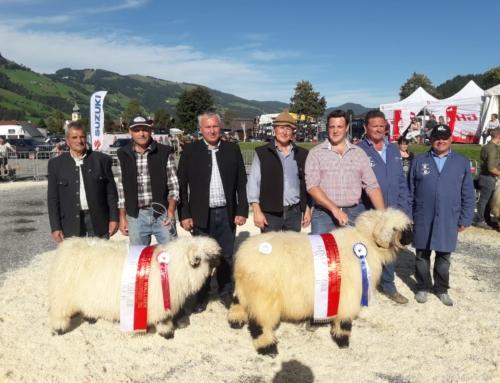 Ergebnis 25 J. Walliser Schwarznasenverein Tirol am 29.9.2019