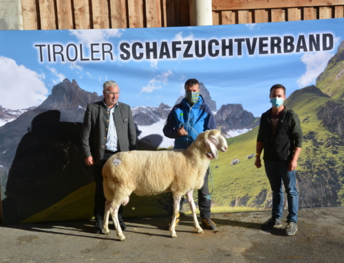 Ergebnis Bergschafversteigerung 3.10.2020 in Imst