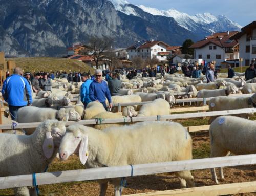 A L L E   Schafausstellungen Frühjahr 2021   A B G E S A G T !