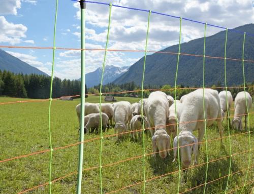 Informationskampagne Schaf- und Ziegenzucht Tirol eGen – Wissenswertes rund ums Thema Weidezauntechnik und Schafschur
