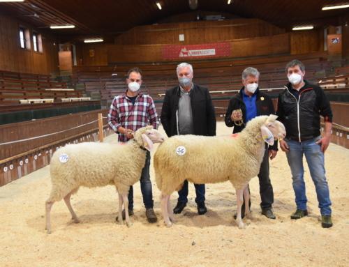 Ergebnis Schaf- und Ziegenversteigerung am Samstag 10.4.2021 in Rotholz
