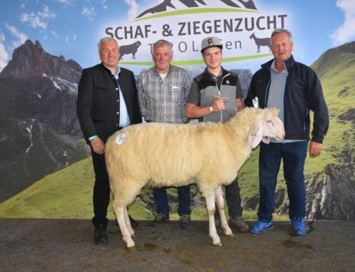 Ergebnis der Schafversteigerung in Rotholz am Samstag, den 9.10.2021